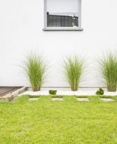 Plants and green grass on terrace of white house with window